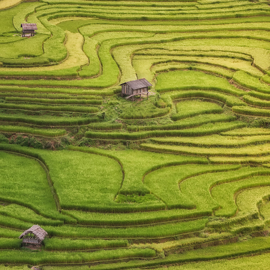 Terraced rice field inside fog and morning ray in Mu Cang Chai, Vietnam